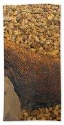 Komodo Beach Towel