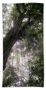 La Tigra Rainforest Canopy Beach Towel