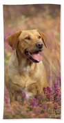 Labrador Dog Beach Towel