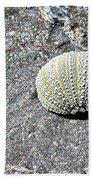 Lacy Shell On A Beachrock Beach Towel