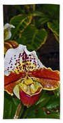 Lady Slipper Orchid Beach Towel