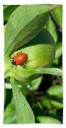 Ladybug Ladybug  Beach Towel