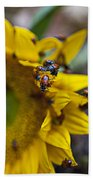 Ladybugs Close Up Beach Towel
