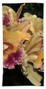 Laeliocattleya Lydia Hubbell Beach Towel