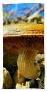 Lakeside Mushroom  Beach Towel