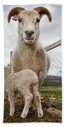 Lamb On A Farm, Iceland Beach Towel