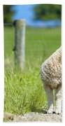 Lamb On The Farm Beach Towel