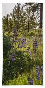 Land Of The Lupines Beach Towel