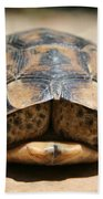 Land Turtle Hiding In Its Shell  Beach Towel