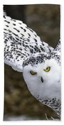 Landing Of The Snowy Owl Where Are You Harry Potter Beach Towel
