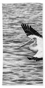 Landing Pelican In Black And White Beach Towel