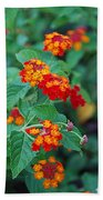 Lantana Delight Beach Towel