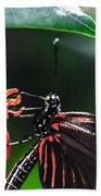 Laparus Doris Butterfly Beach Towel