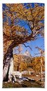 Larch Tree Frames Prusik Peak Beach Towel