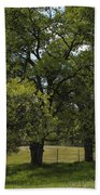 Large Green Oak Trees Beach Towel