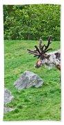 Large Reindeer Molting In Summer Pasture Art Prints Beach Towel