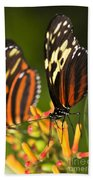 Large Tiger Butterflies Beach Towel