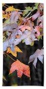 Late Autumn Maples Beach Towel