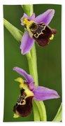 Late Spider Orchid Switzerland Beach Towel