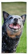 Laughing Dog Beach Towel