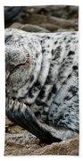 Laughing Seal Beach Towel