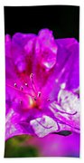 Lavendar Beauty Beach Towel