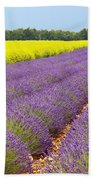 Lavender And Mustard Beach Towel