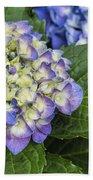 Lavender Blue Hydrangea Blossoms Beach Towel