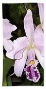 Lavender Cattleya Orchids Beach Towel