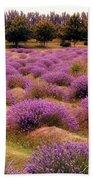 Lavender Fields 2 Beach Towel