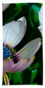 Lavender Frost African Daisy Beach Towel