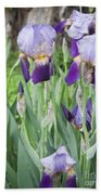 Lavender Iris Group Beach Towel
