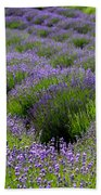 Lavender Rows Beach Towel