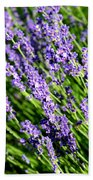 Lavender Square Beach Towel