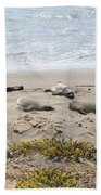 Lazy Seals Beach Towel