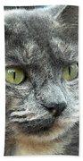 Le Petit Chat Beach Towel