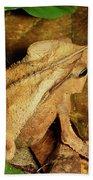 Leaf Litter Toad Bufo Typhonius Beach Towel