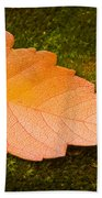 Leaf On Moss Beach Towel by Adam Romanowicz
