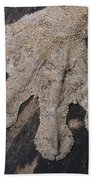 Leaf-tailed Gecko Foot Beach Towel