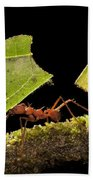 Leafcutter Ants Carrying Leaves Costa Beach Towel