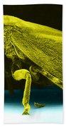Leafhopper, Sem Beach Towel