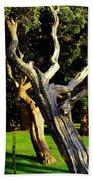 Leaning Cedars Of West Chop Beach Towel