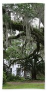 Leaning Live Oak Beach Towel