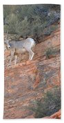 Learning How To Rock Climb Zion Beach Towel