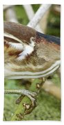 Least Bittern Female Feeding Beach Towel