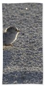 Least Tern Chick Beach Towel