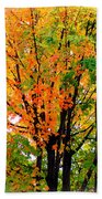 Leaves Changing Colors Beach Towel