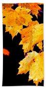 Leaves Of Maple Beach Towel