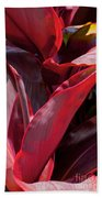 Leaves Of The Red Ti Plant Beach Towel