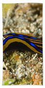 Leech Headshield Slug Beach Sheet